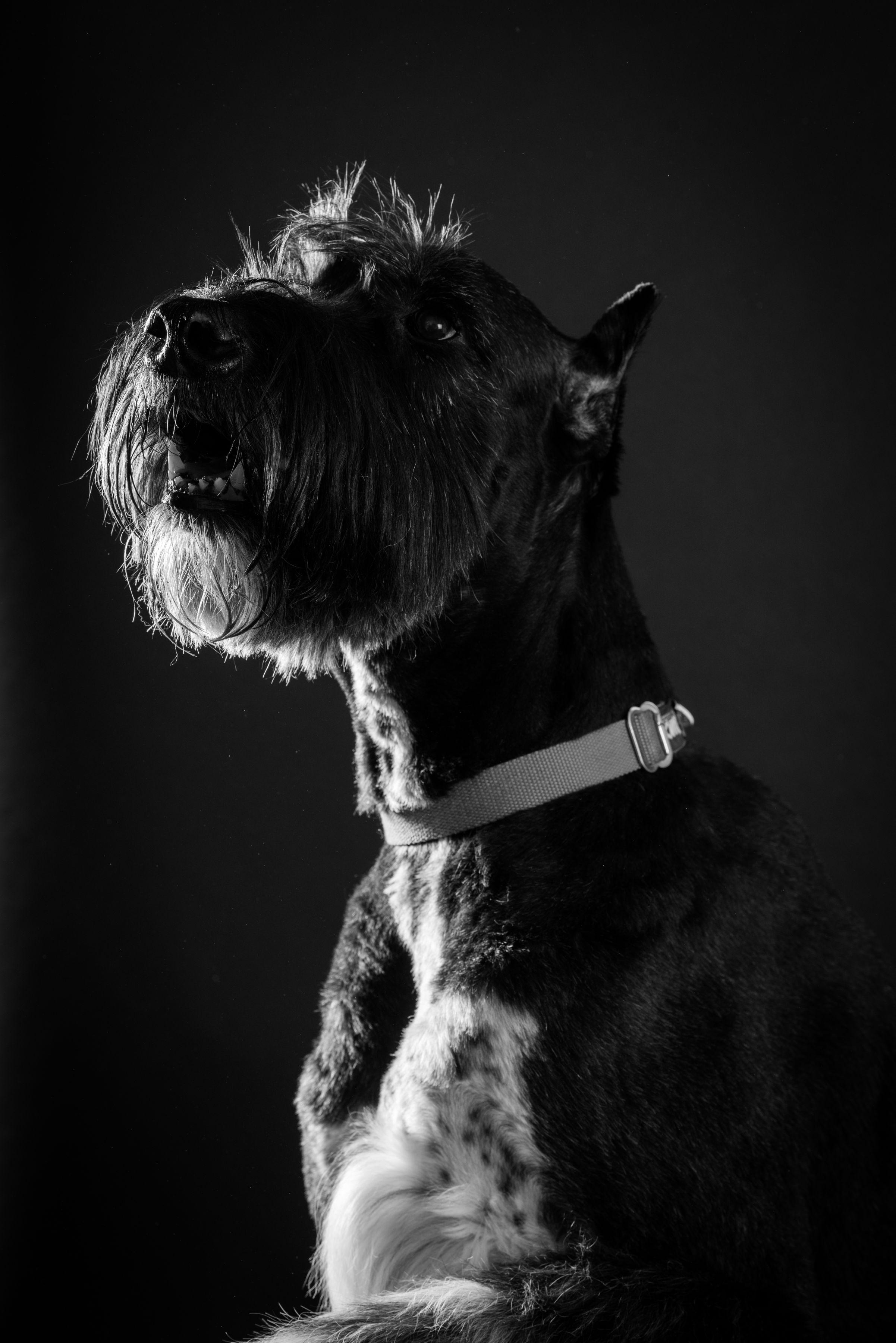 B&W Dog Portraits-whitneymclaren-0069.jpg