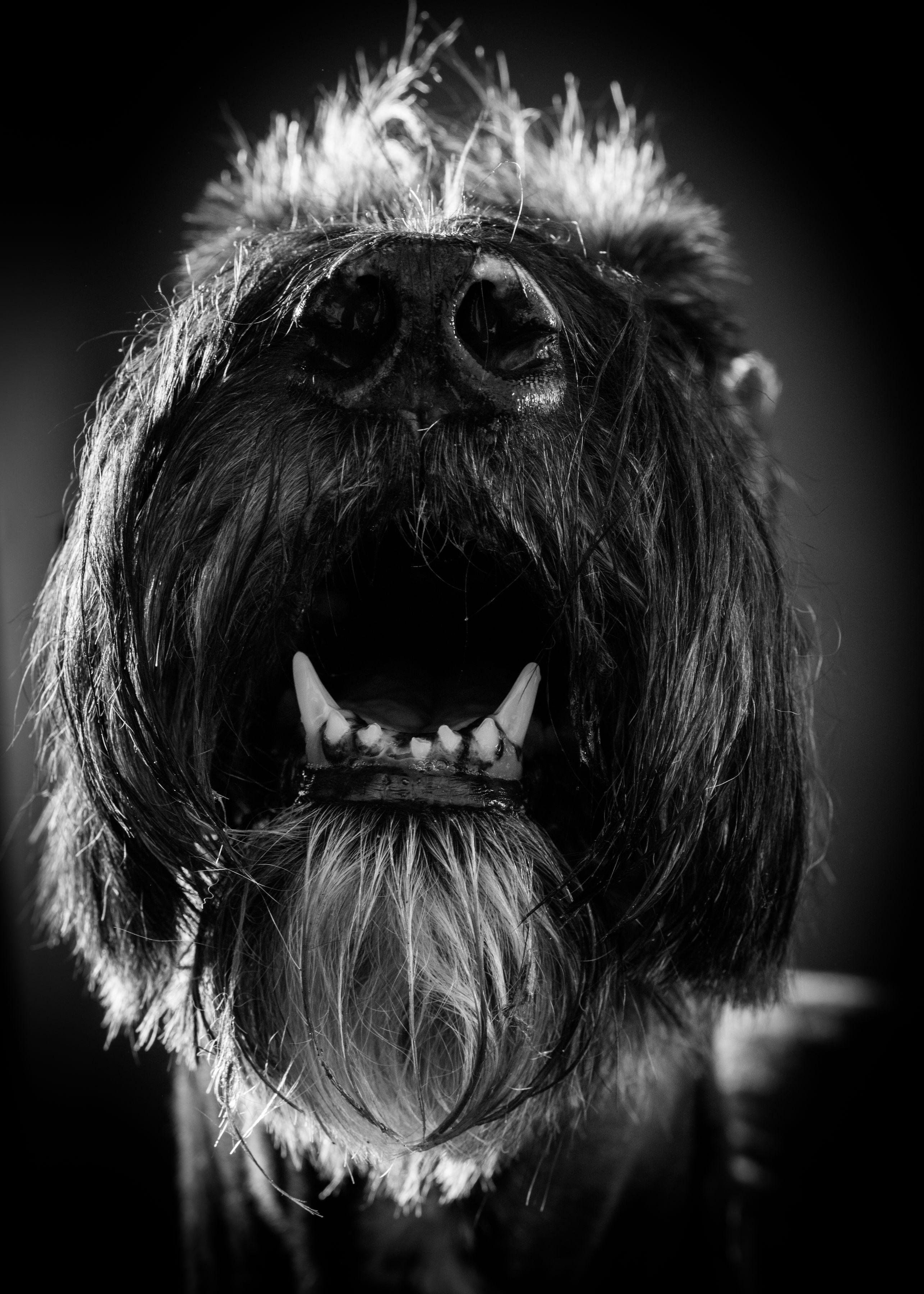 B&W Dog Portraits-whitneymclaren-22.jpg