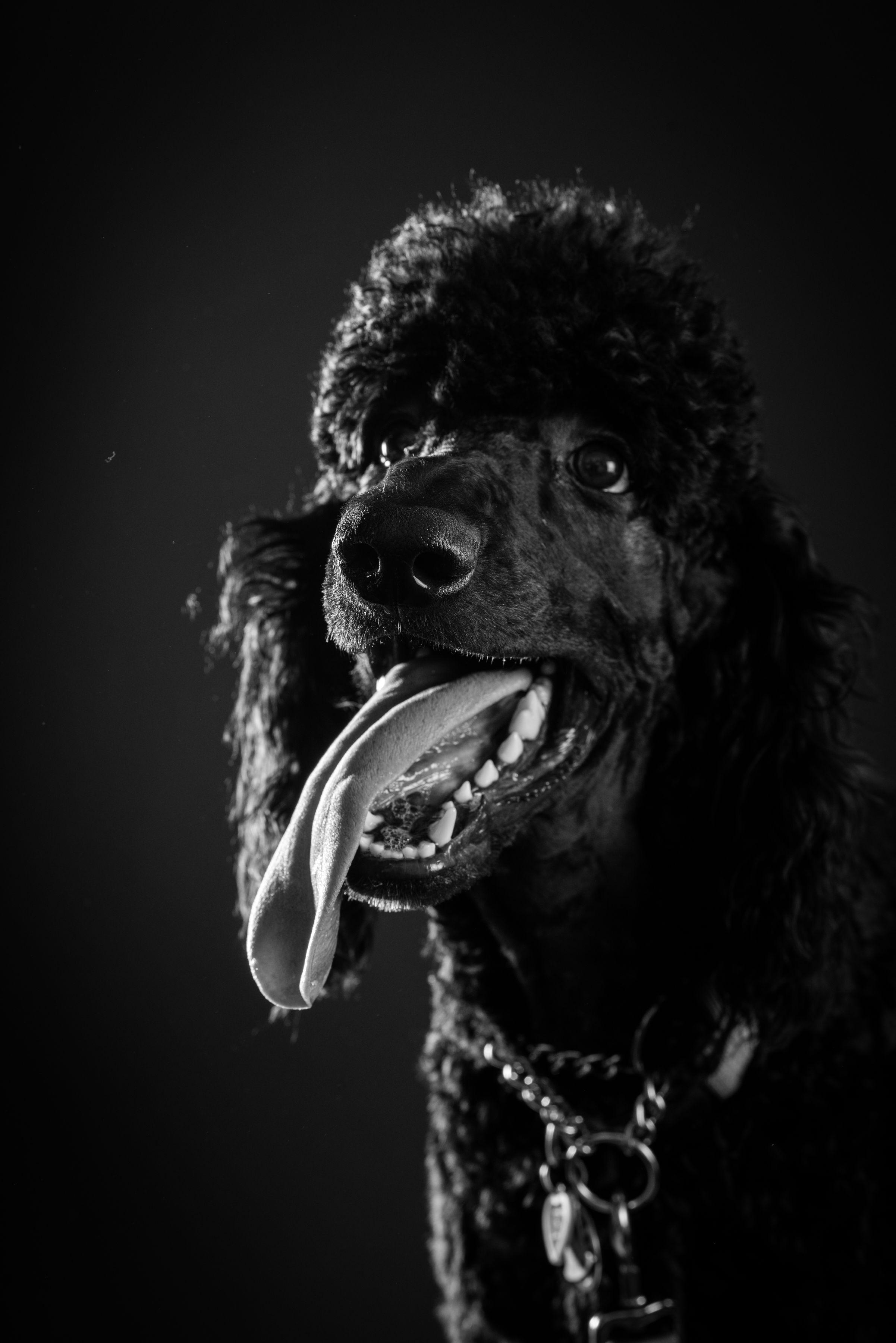 B&W Dog Portraits-whitneymclaren-3-10.jpg