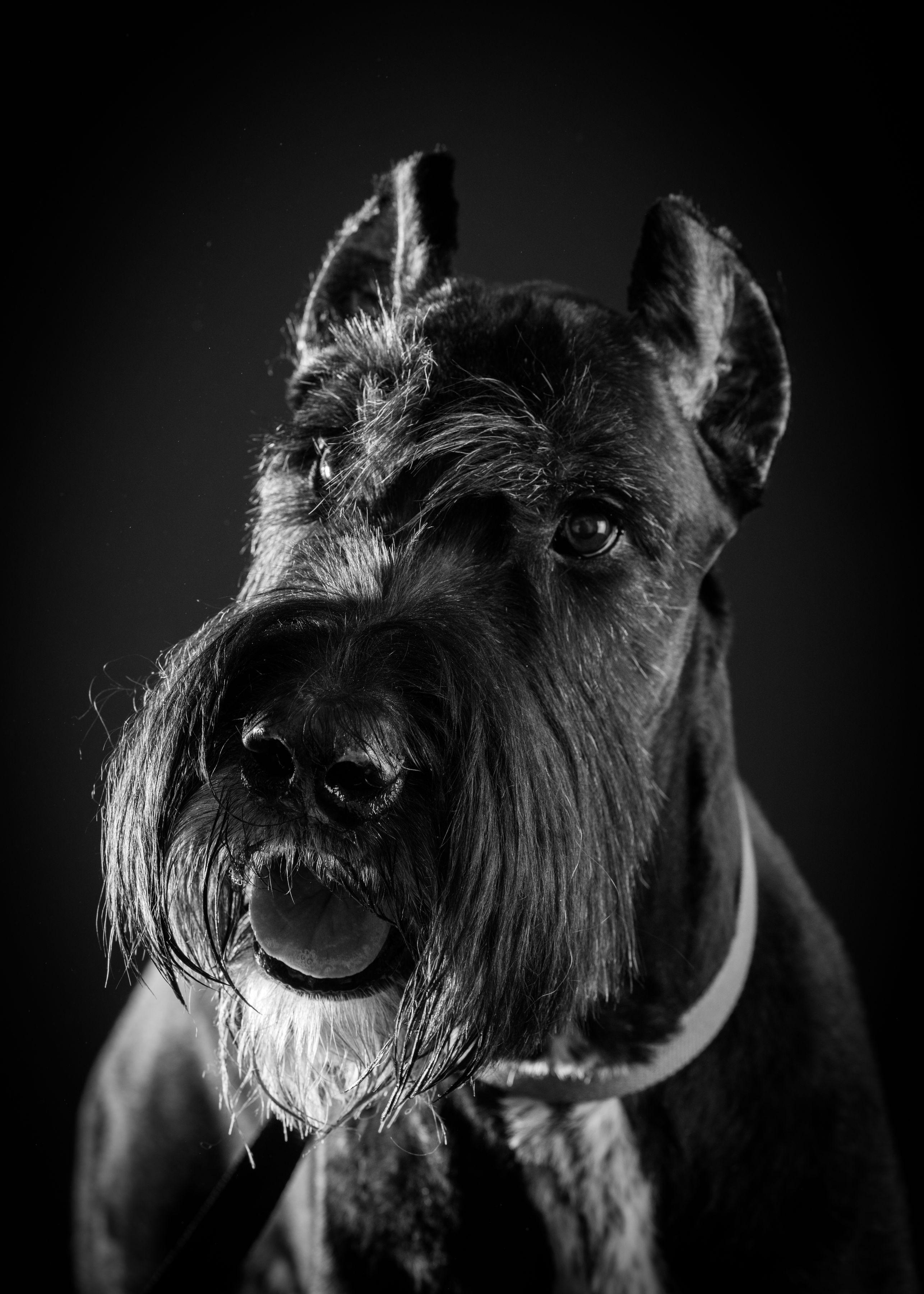B&W Dog Portraits-whitneymclaren-3-2.jpg