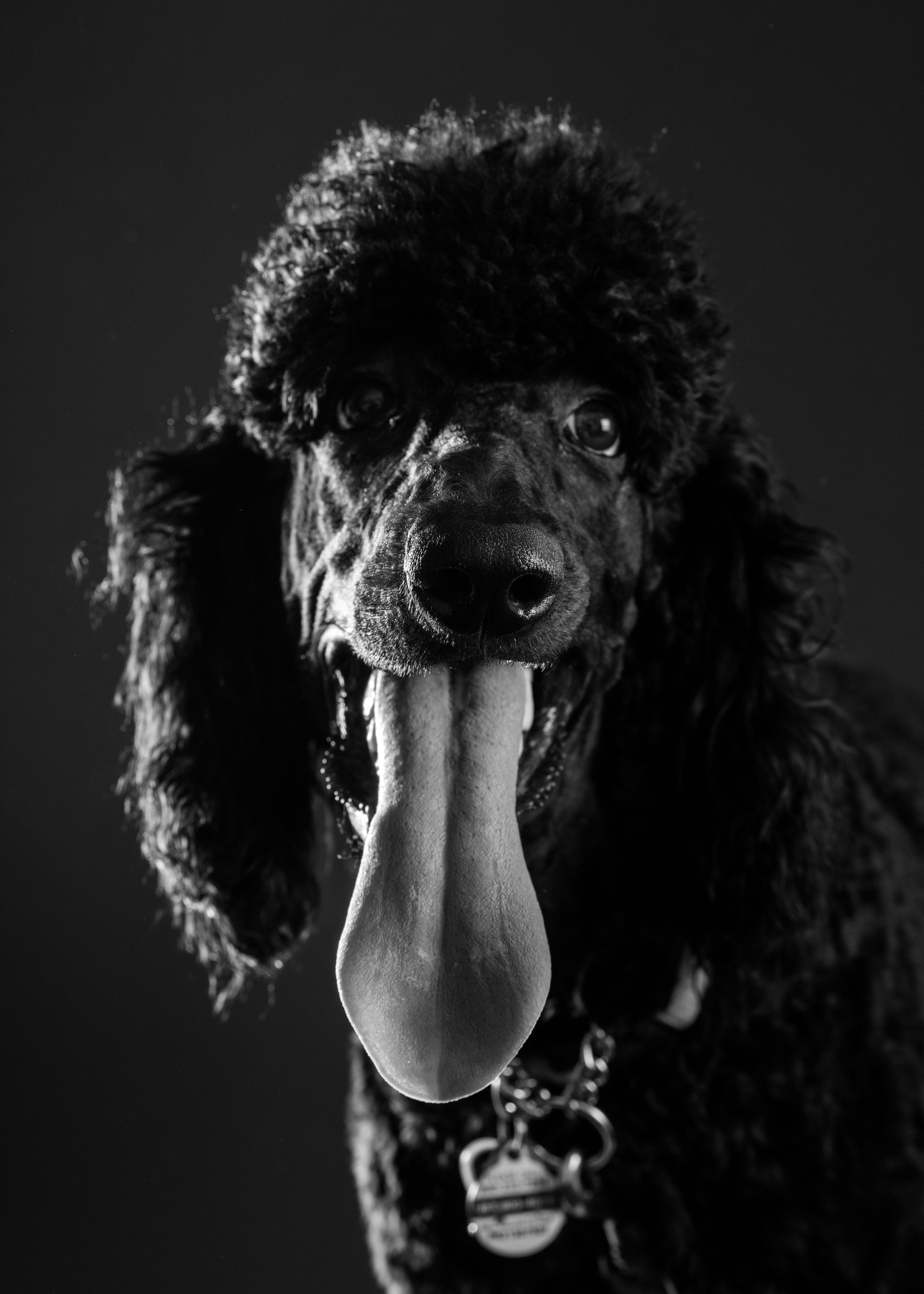 B&W Dog Portraits-whitneymclaren-3-4-.jpg