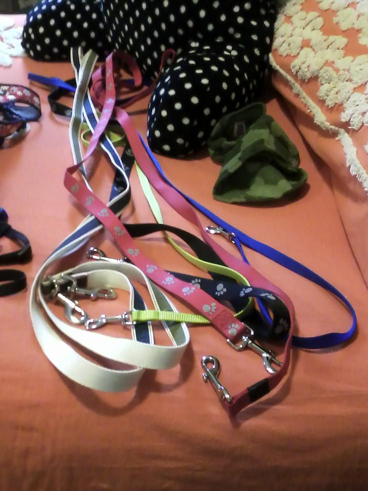 How Many Collars  Harnesses  Leashes Does Your Dog Have