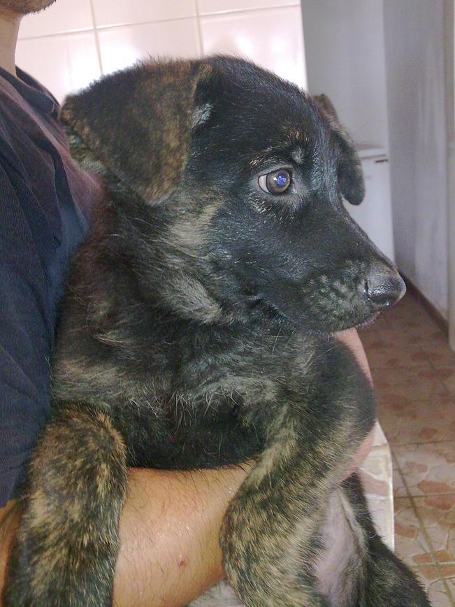Question about my german shepherd-14032009546.jpg