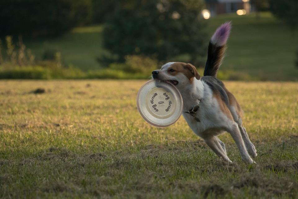 Disc Dog thread-1gz12srcdb8gghqlcbf7om.jpg
