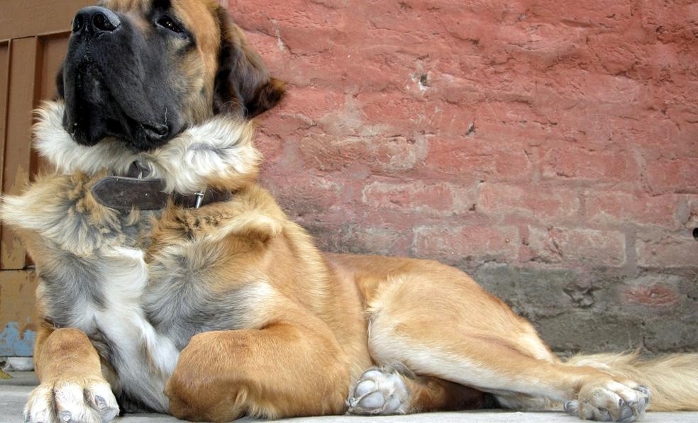 Indian Dog Breeds Name Indian Dog Breeds 2 Jpg