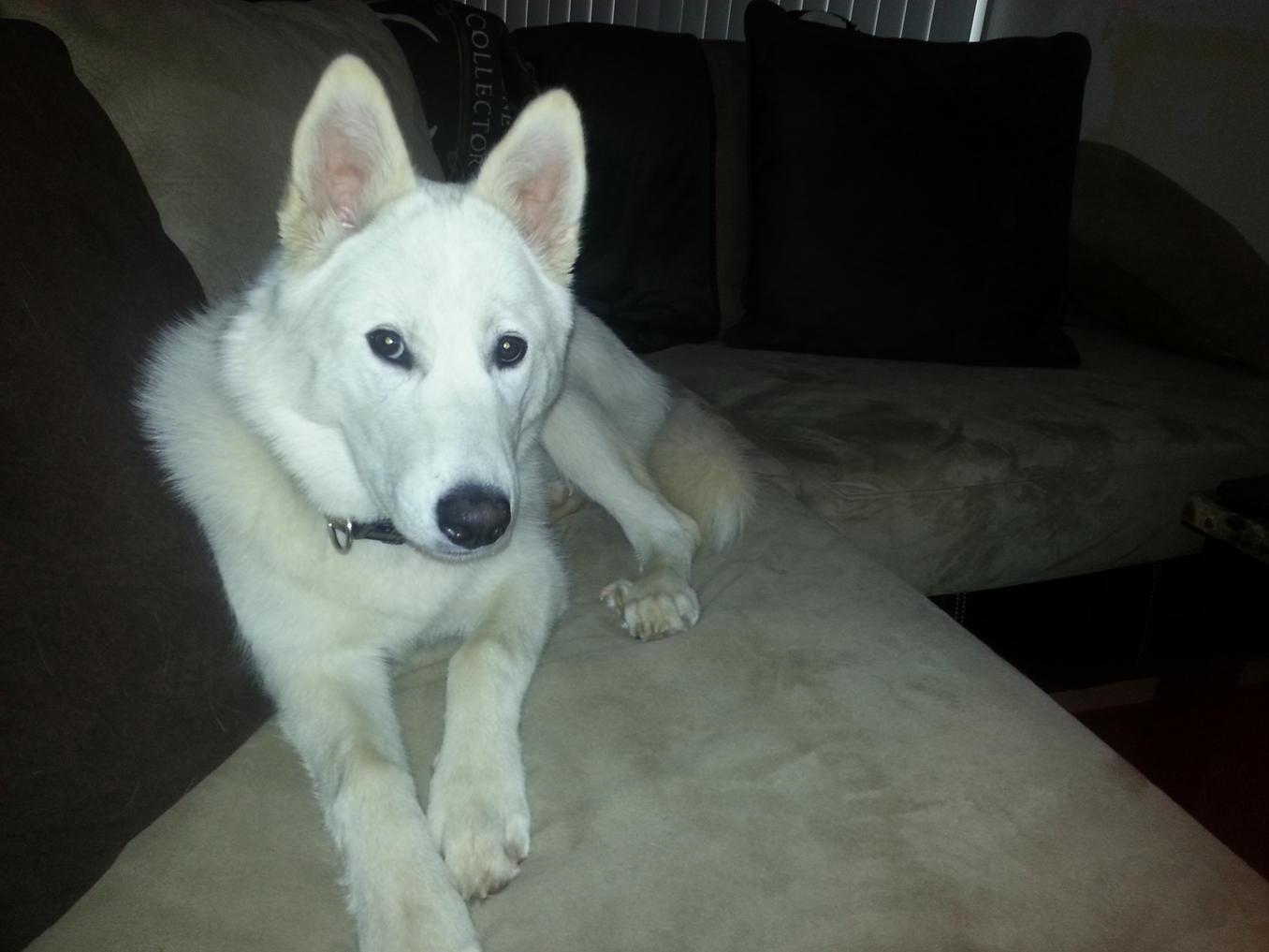 dog breed question-20130525_133206.jpg