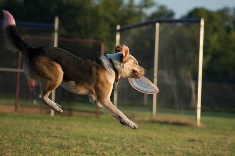Disc Dog thread-2foowlkz1sfoqmbuwkn3r3.jpg
