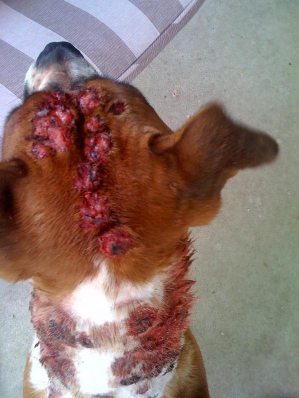 Lump On  Year Old Dog