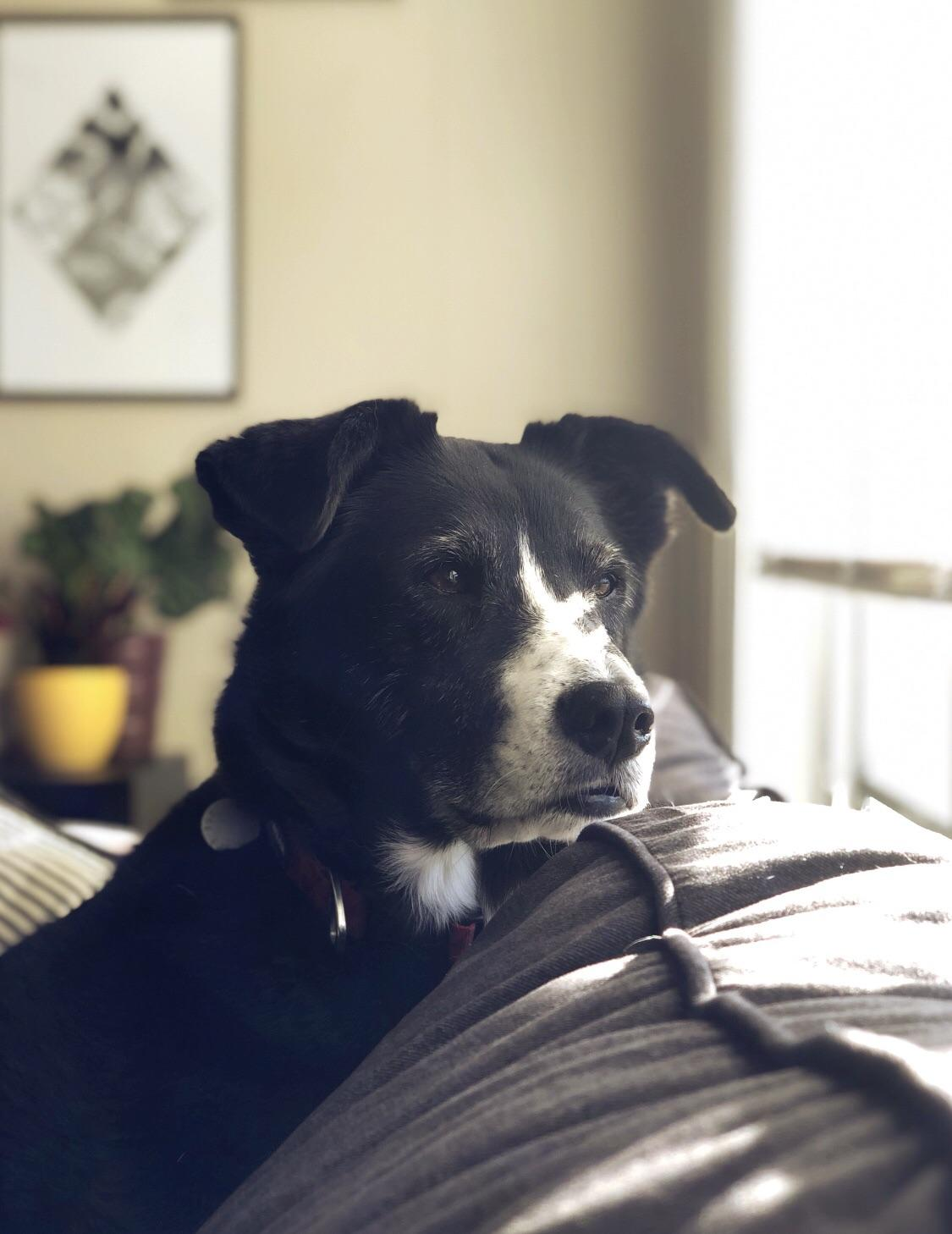 Advice about senior dog with anxiety -- experiences with fluoxetine?-6xi8oqvpt0j21.jpg