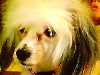 Poodle Cut-babyface.jpg