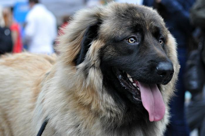 Image result for dog guardian