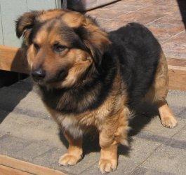 Yorkshire Terrier Nj Wierd Dog Mixes