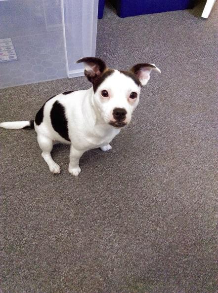 My dog Daisy-cutedaisy-july-2019-.jpg