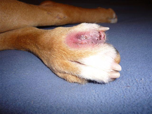 Dog Bite On Dog Eye