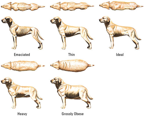 Is my pups stomach too big?-dog_weight_chart1.jpg