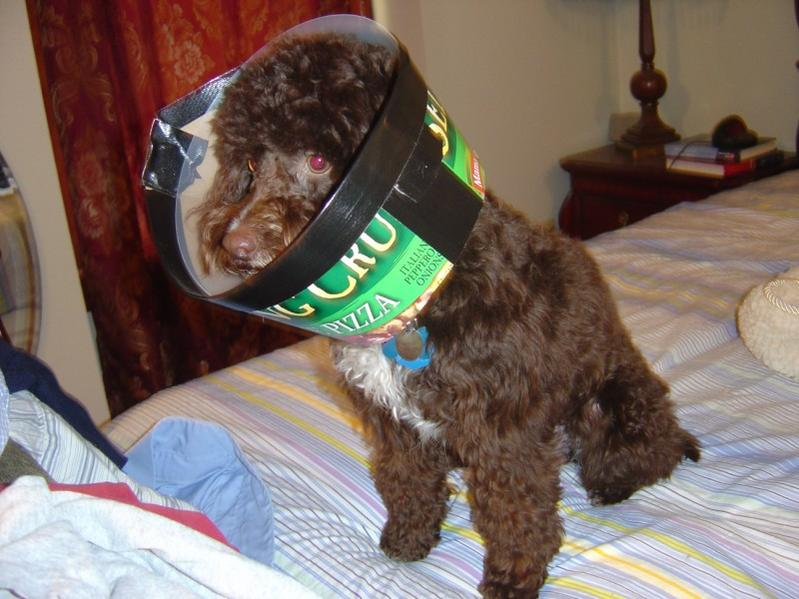 Spaying Is A Cone Required