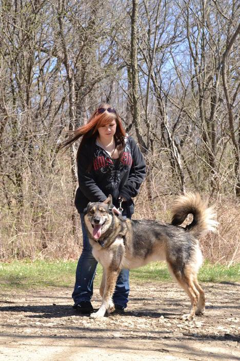 Husky/Wolf Hybrid or Husky/Shepherd mix???-dsc_0863.jpg