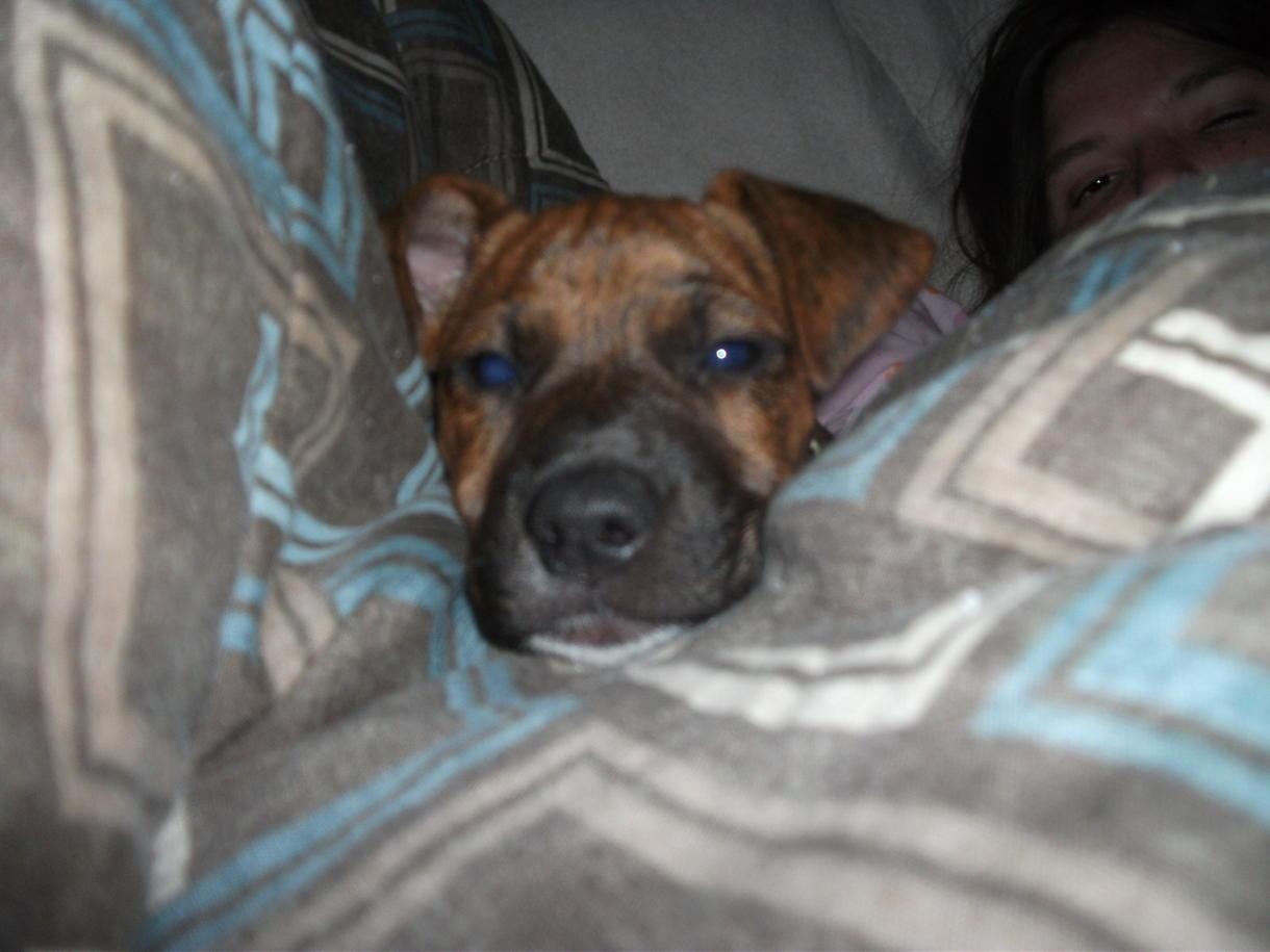 Boxer hound mix?-dscf1139.jpg