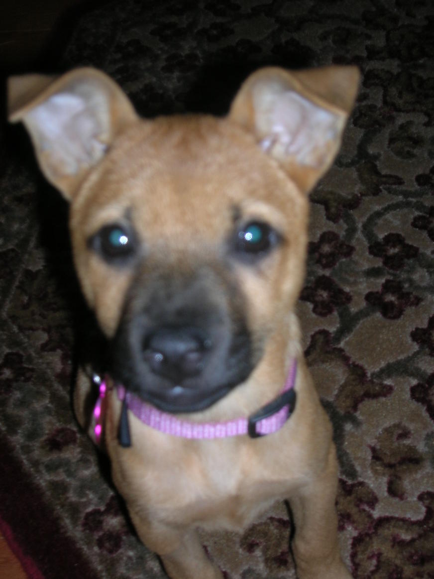 Is she a chihuahua/terrier mix?-dscn2404.jpg