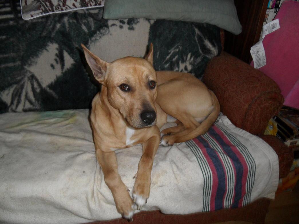 pharoh hound/pit?-dukemar20122-005.jpg