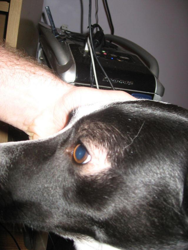 Hair Loss Around Dog S Eyes Emma Eye2 Jpg