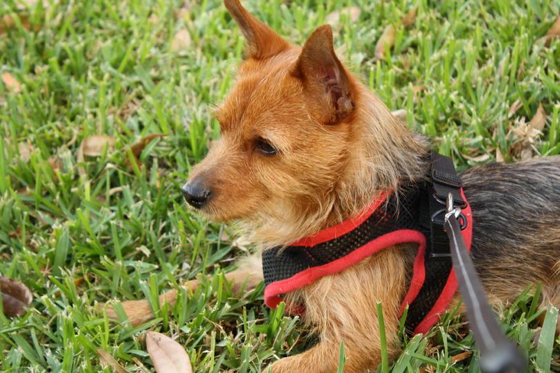 ... Dog Breeds Different Dog Breeds Terrier Dog Breeds Cheapest Dog Breeds