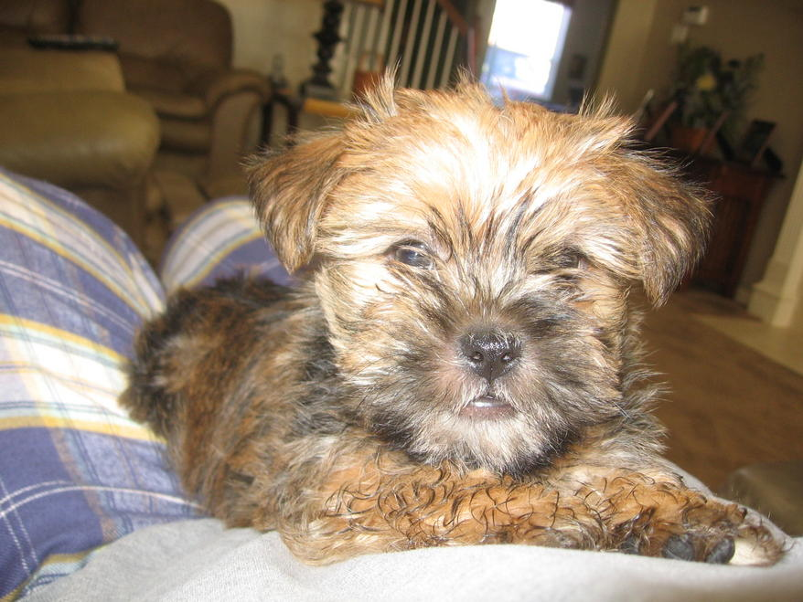 Caring for parvo puppy - my story-img_4020.jpg