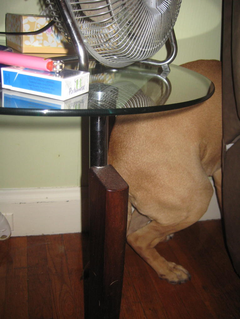 He's becoming an under-the-table dog.-img_6426.jpg