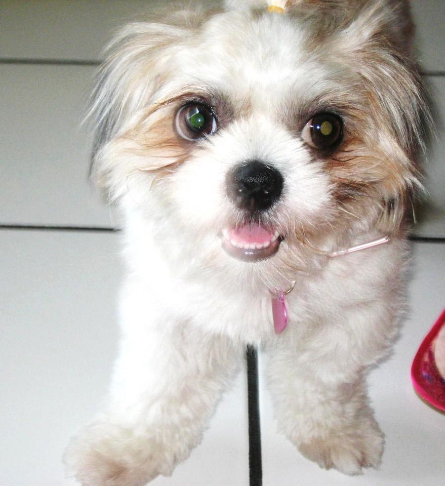 Remove Dog's Tear stains-img_8317.jpg