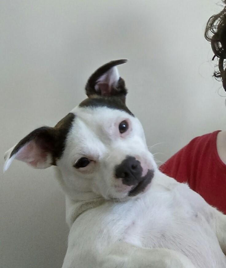 My dog Daisy-meanddaisy3.jpg