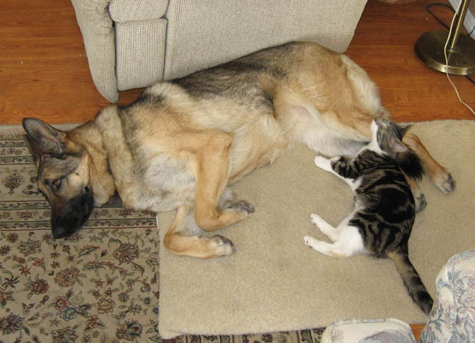 How to get my dog to leave cats (and other animals) alone?-nap-time1-31-2010.jpg