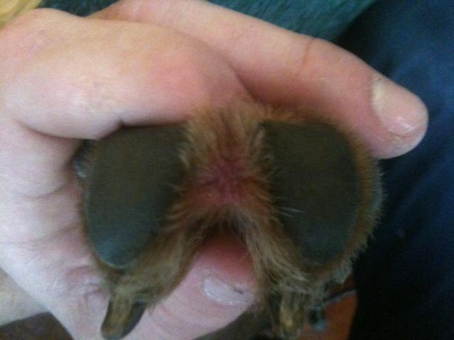 Red Irritation Between Paws..................PLEASE HELP-photo-3.jpg