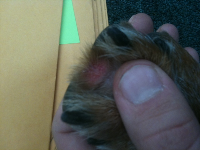 Red Irritation Between Paws..................PLEASE HELP-photo-4.jpg