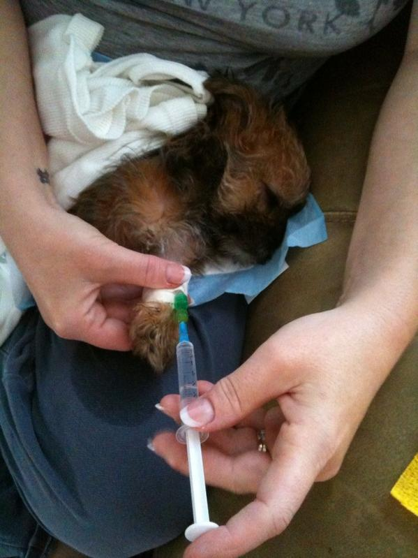 Caring for parvo puppy - my story-photo.jpg