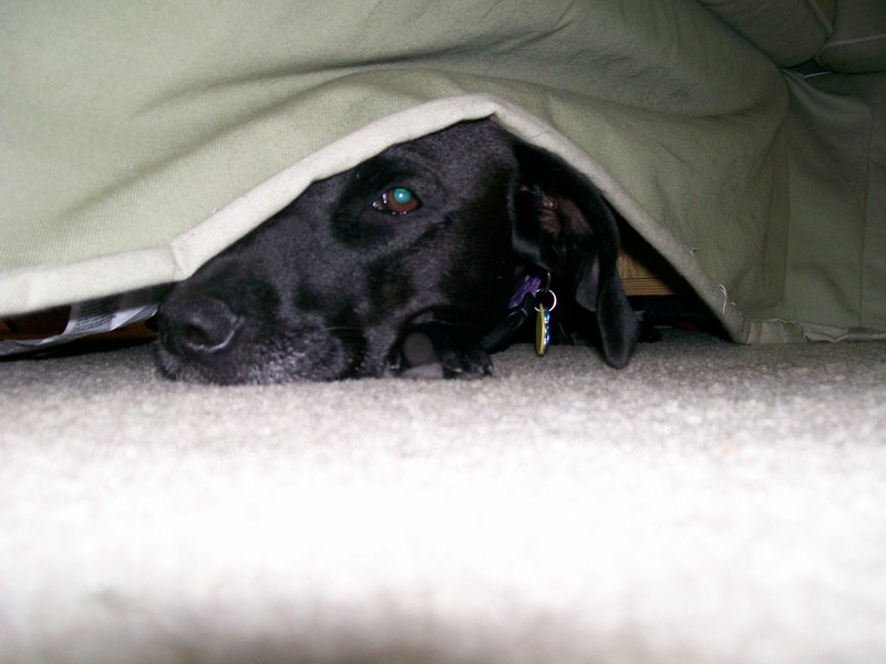 Why does my dog go under the couch so much?-prom002-1.jpg
