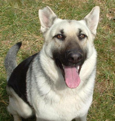 Dog Has Black Spot On Tongue