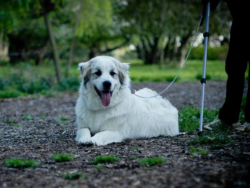 Treat fatigue/dog picky with treats-romani.jpg