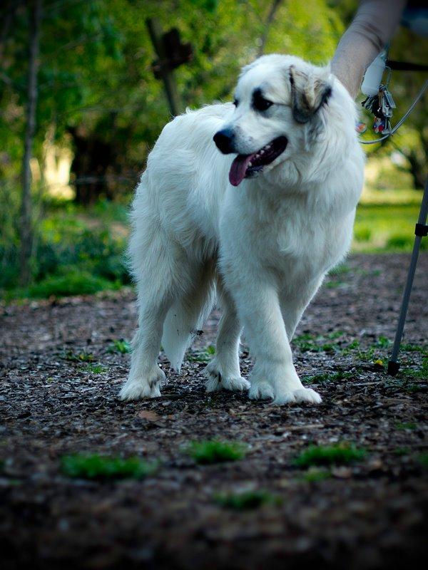 Treat fatigue/dog picky with treats-romanii.jpg