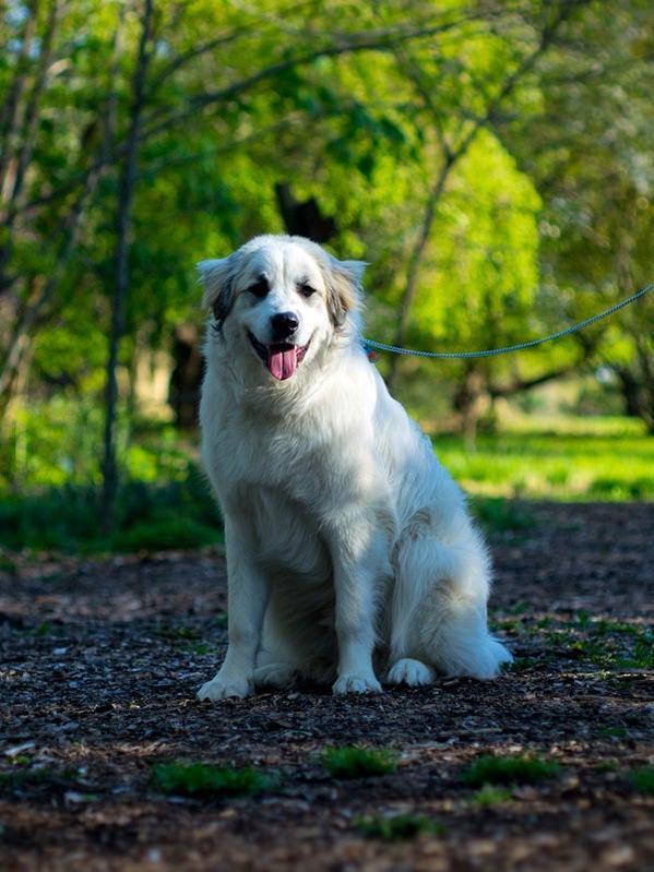 Treat fatigue/dog picky with treats-romansit-.jpg