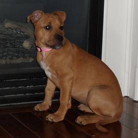 , you can be most definitely positive she is a ridgeback/boxer cross