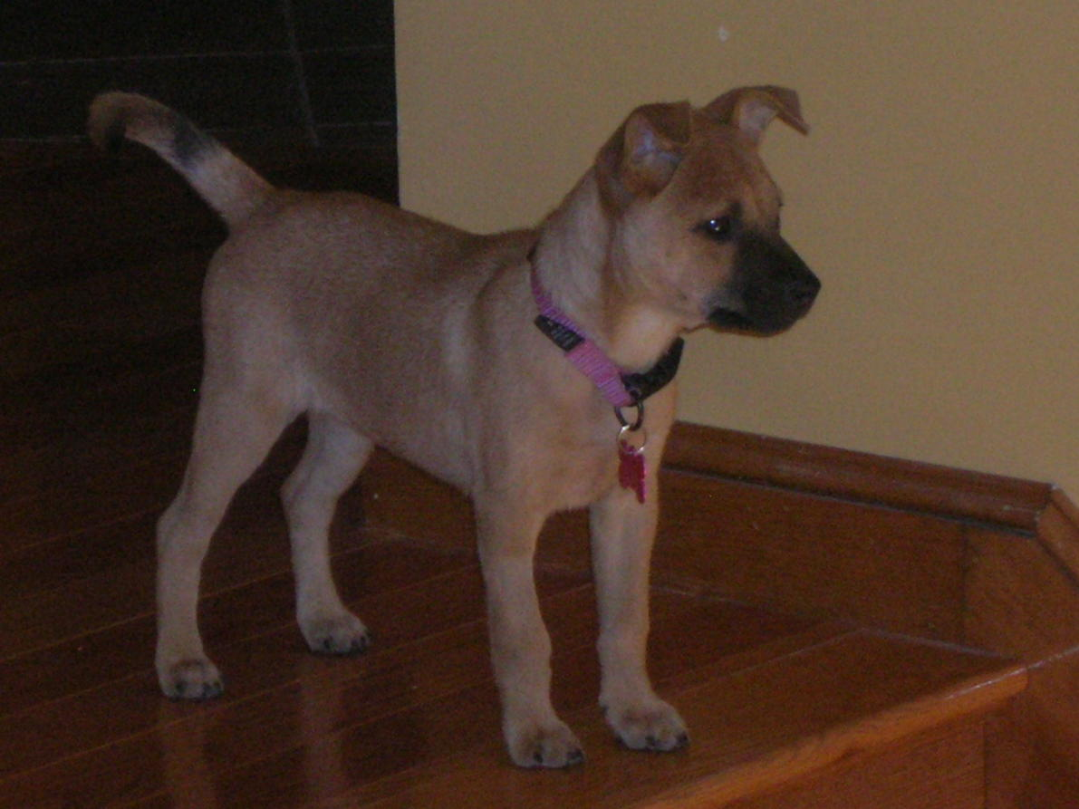 Is she a chihuahua/terrier mix?-rscn2385.jpg