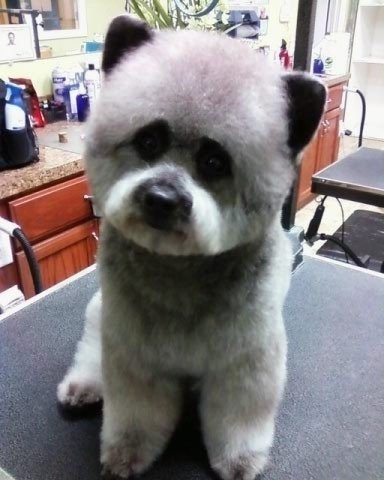 Coolest Looking Dog Breeds