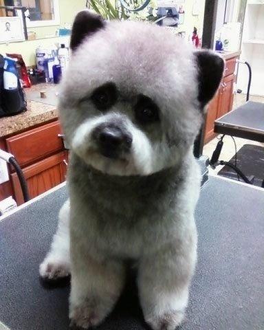 Alfa img - Showing > Unusual Dog Breed Mixes Unique Looking Dog Breeds