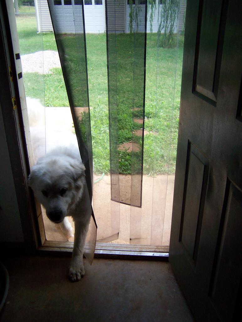 Great Alternative Dog Door Idea