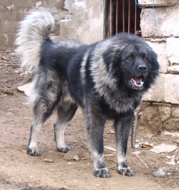 Most intimidating dog breeds subliminal dating