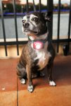 lighted_dog_collars-(28).jpg