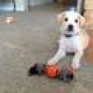 Diamond Vs 4health Dog Food Puppy Forum And Dog Forums