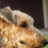 theairedale