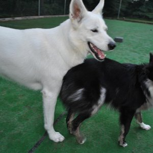 Gus and his girlfriend, Ariel, at The Country Kennel's Daycare. Gus is an employee ;)