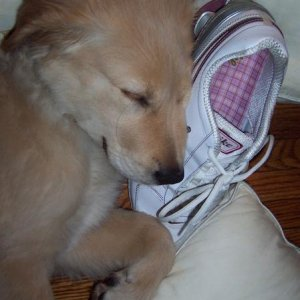 Dreaming of my nikes...